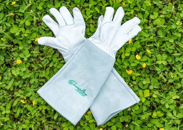Thornproof Leather Gloves