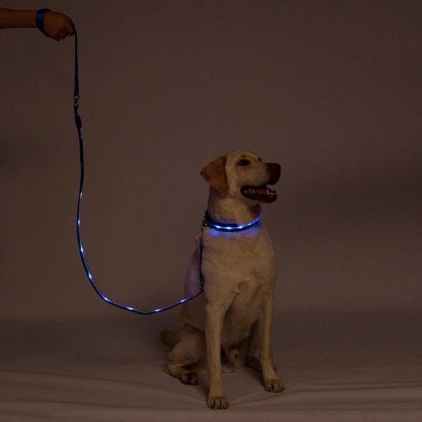 Blazin' Bison LED Dog leash