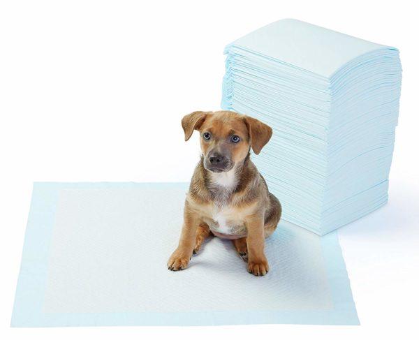 AmazonBasics Pet Training and Puppy Pads