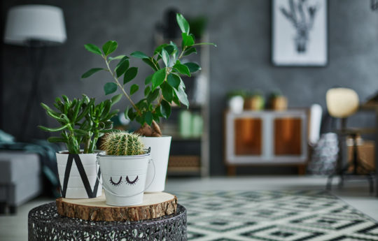 14 Best Indoor Houseplants That Are Easy to Maintain — Green Thumb or Not
