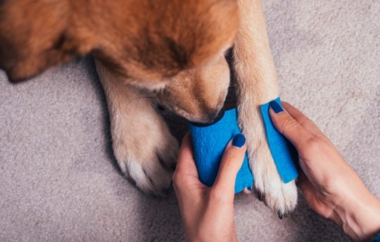 18 Essentials For Your Pet First Aid Kit, Because Even Furbabies Need TLC