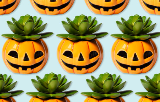 Everything You Need for a Family-Friendly Halloween Spooktacular