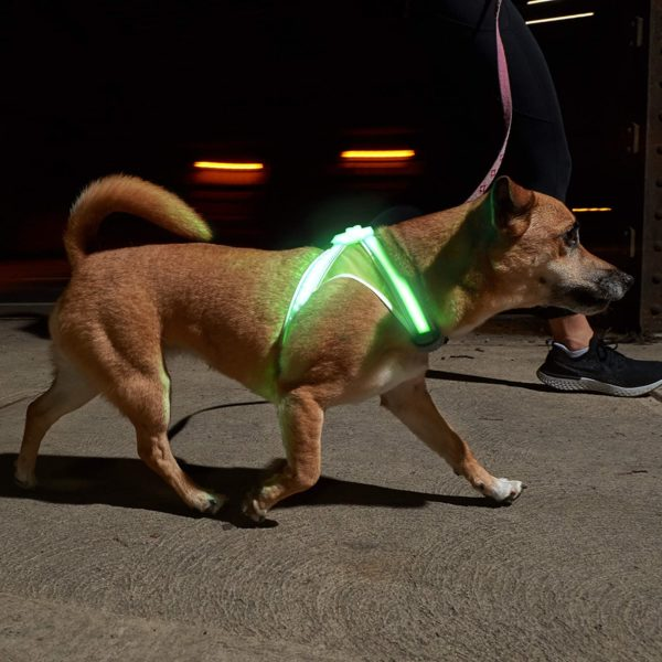 Illuminated and Reflective Harness