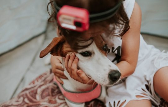 10 Techy Dog Products for Fur-Parents Everywhere