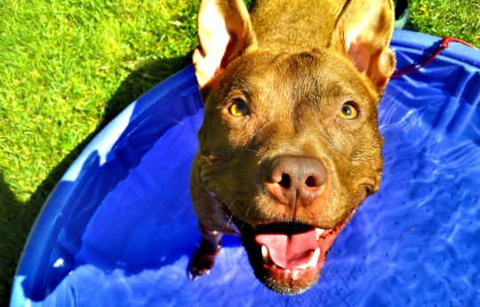 9 Ways to Entertain Energetic Dogs