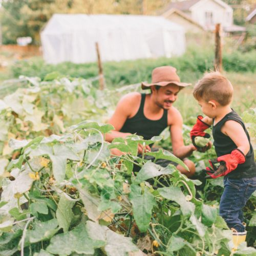 Everything You Need to Start a Community Garden (And Why You Should)