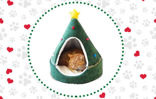 10 Festive Holiday Cat Houses That Are Pawsitively Adorable