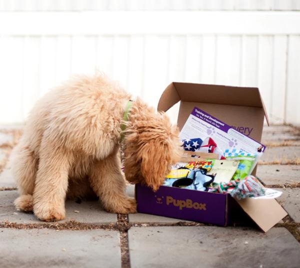 PupBox Expansion