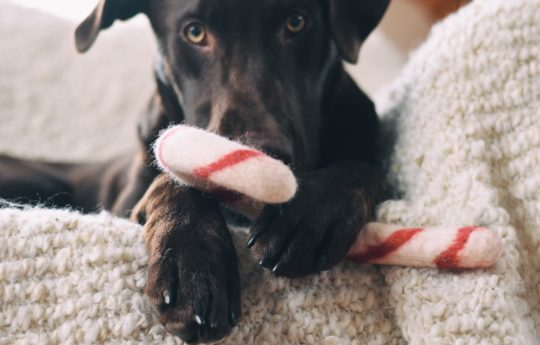 Pup Opinions Wanted: We'll Send Dog Toys & Pay for Your Pup's Thoughts (Pawesome Job Alert)