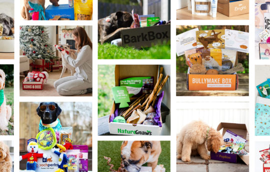 22 Best Dog Subscription Boxes to Treat Your Furry Best Friend