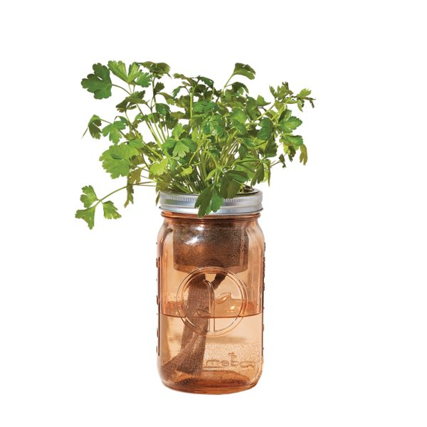 Organic Herb Garden Jar Set